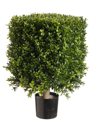 "21"" Square Boxwood Topiary in Plastic Pot Two Tone Green (pack of 1)"