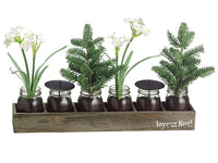 "15"" Narcissus/Pine Tree in Glass Vase x6 w/Wood Box White Green (pack of 2)"
