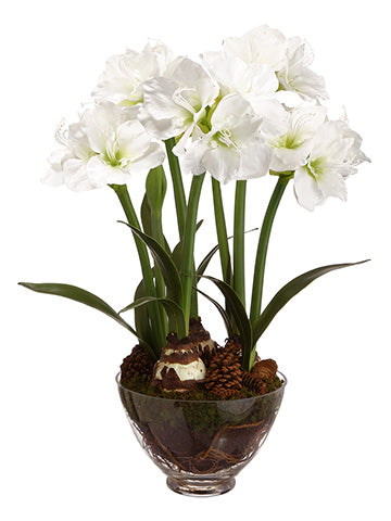 "33.75"" Amaryllis/Pine Cone in Glass Vase White (pack of 1)"