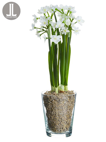 "15"" Narcissus in Glass Vase  White (pack of 4)"