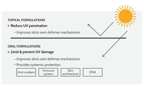 Diagram showing topical and oral UV protection