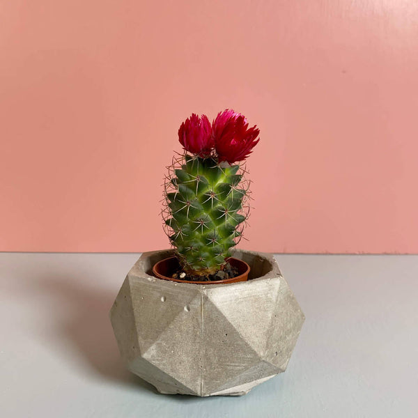 Polygon Pots - True Concrete Color