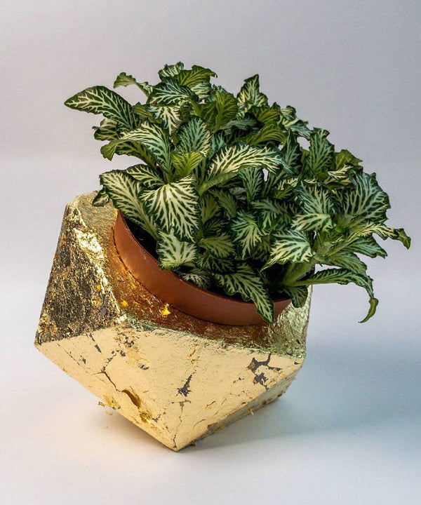 Geometric Planters - Gold Flakes
