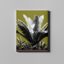 Load image into Gallery viewer, Olive Drab Plant