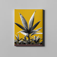 Load image into Gallery viewer, Golden Rod Plant