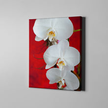Load image into Gallery viewer, White Orchid