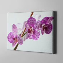 Load image into Gallery viewer, Purple White Flower