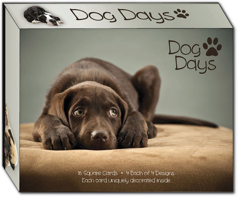 Dog Days - Assorted Greeting Cards, Box of 16