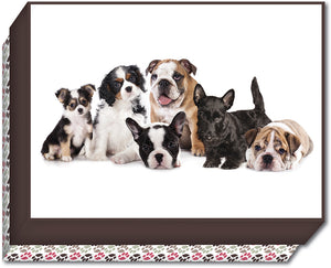 Group of Puppies - Boxed Note Cards, Box of 15