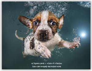 Underwater Dogs - Assorted Greeting Cards, Box of 16