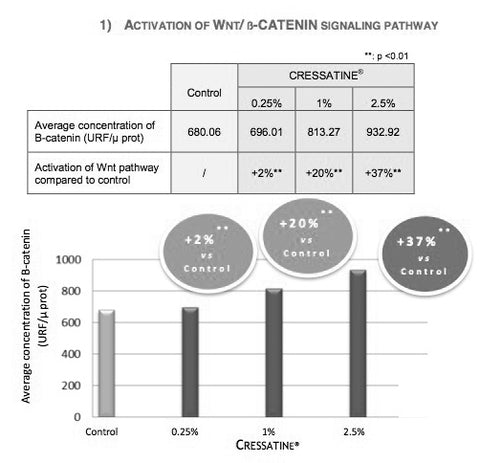 CRESSATINE chart boost of Wnt / β-catenin pathway, regeneration and growth of hair