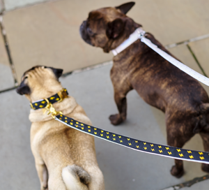 French Bulldog wearing Metallic Luxury Dog Lead