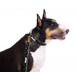 English Bull Terrier wearing Metallic Luxury Dog Lead