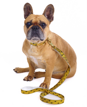 Load image into Gallery viewer, French Bulldog wearing Metallic Gold Quick Release Dog Collar