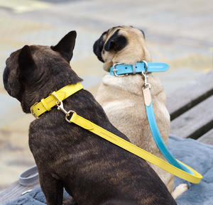 French Bulldog wearing Luxury Yellow Leather Dog Collar
