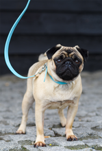 Load image into Gallery viewer, Pug Wearing Luxury Blue Dog Collar