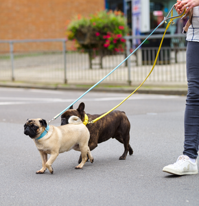 French Bulldog wearing Luxury Yellow Leather Dog Lead