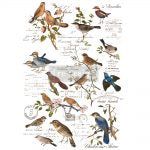 Postal Birds - ReDesign with Prima Decor Transfer®