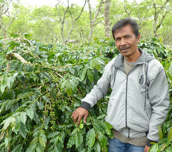 The Coffee Price Crisis, Fair Trade, and How We Pay Our Producers