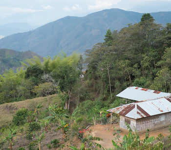 Recovering Indigenous Culture Through Coffee in Colombia