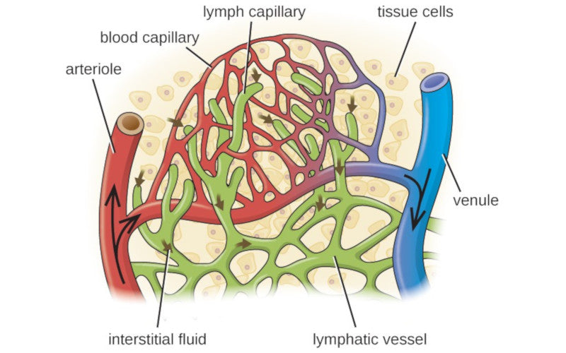Improve Circulation to the Lymphatic System with Whole Body Vibration