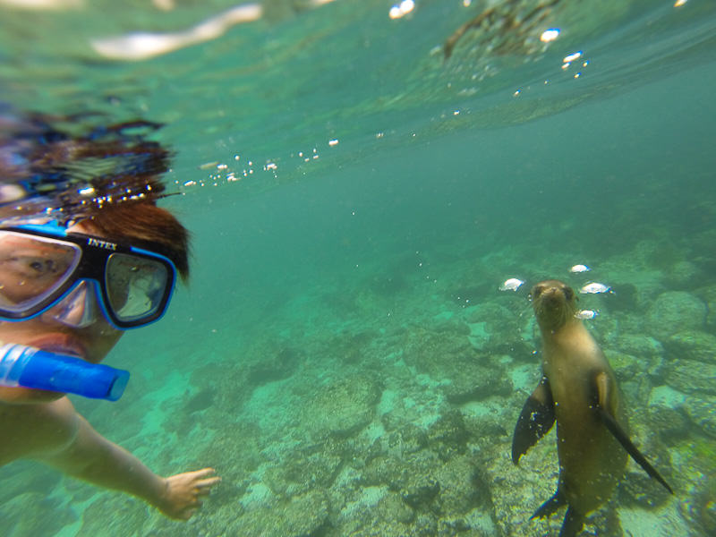 Galapagos Islands Snorkel with sea lions