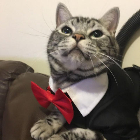 Male CAT Wedding Dress