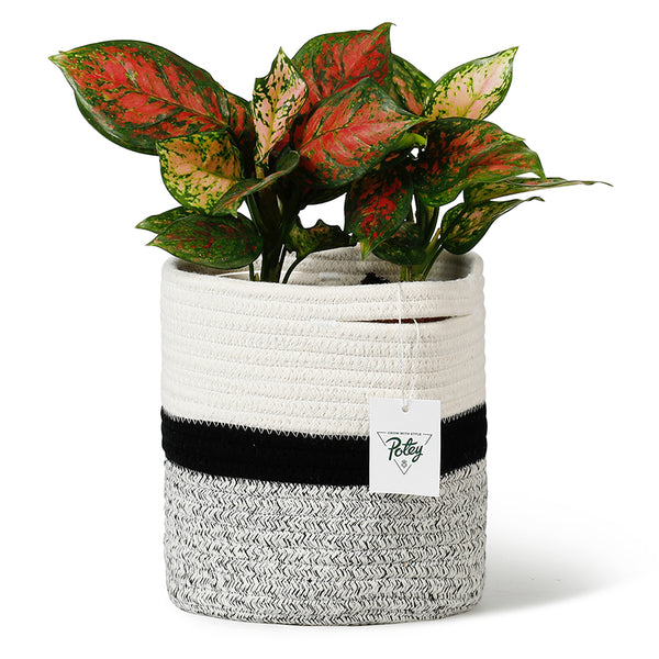 Cotton Rope Plant Basket, White and Black