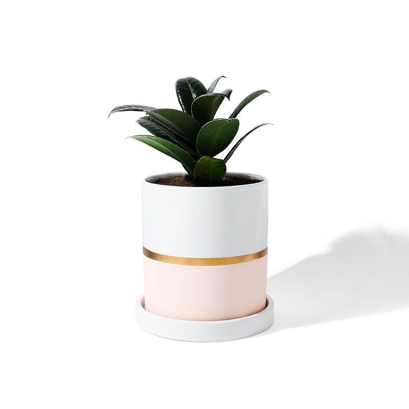 Cylinder Ceramic Planter with Saucer, Pink