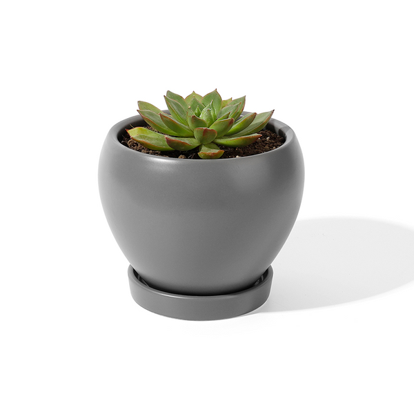 4.8 Inch Porcelain Planter with Saucer, Grey