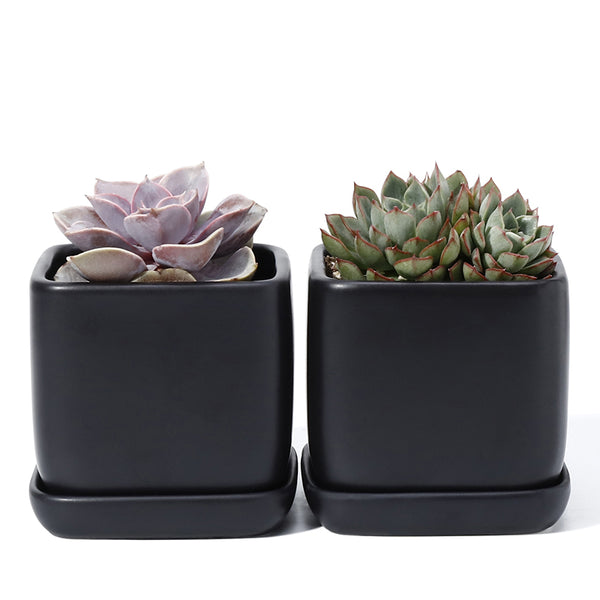 3.5 Inch Black Square Succulent Pot