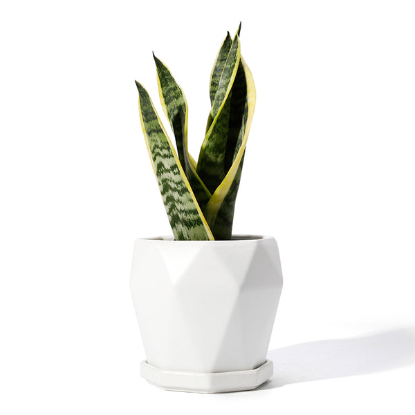 Geometric White Ceramic Planter