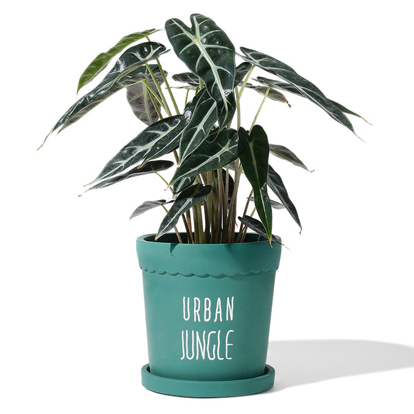 Teal Urban Jungle Cement Planter