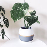 5.1 Inch Ceramic Planter with Saucer