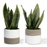 5 Inch Cement Planter, Set of 2