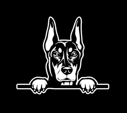 peeking doberman pinscher decal car truck window dog sticker