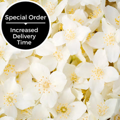 Jasmine Scent - Special Order Only-Somethin' Special Shop