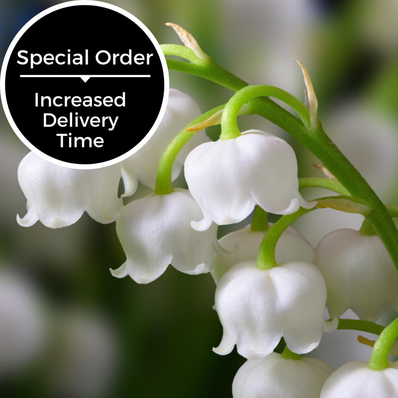 Lily of the Valley Scent - Special Order Only-Scents-Somethin' Special Shop
