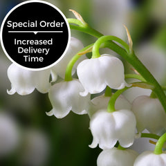 Lily of the Valley Scent - Special Order Only-Somethin' Special Shop