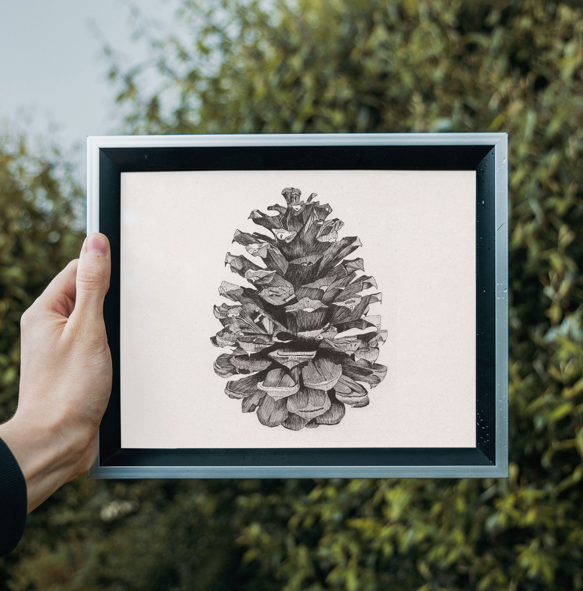 Pine Cone • Hand Drawn Print - Stokedthebrand. Lifestyle products for outdoor adventures. Made in South Africa