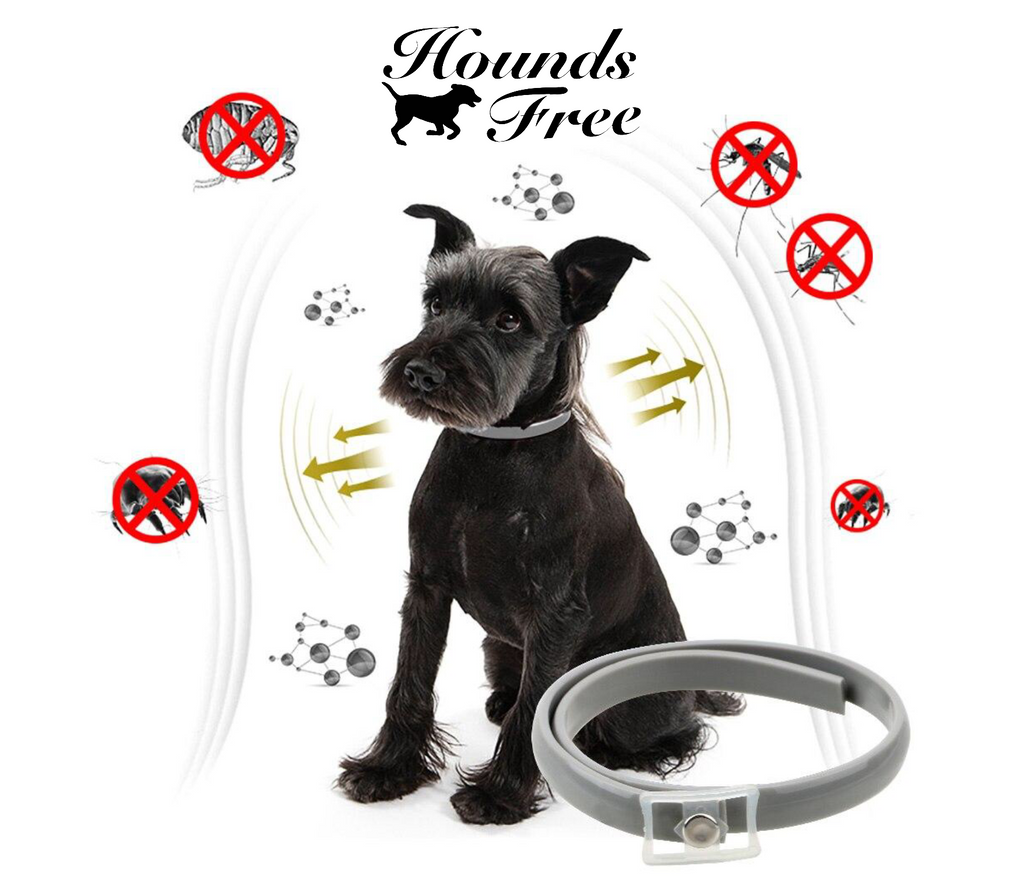 Hounds Free Anti Flea Collar
