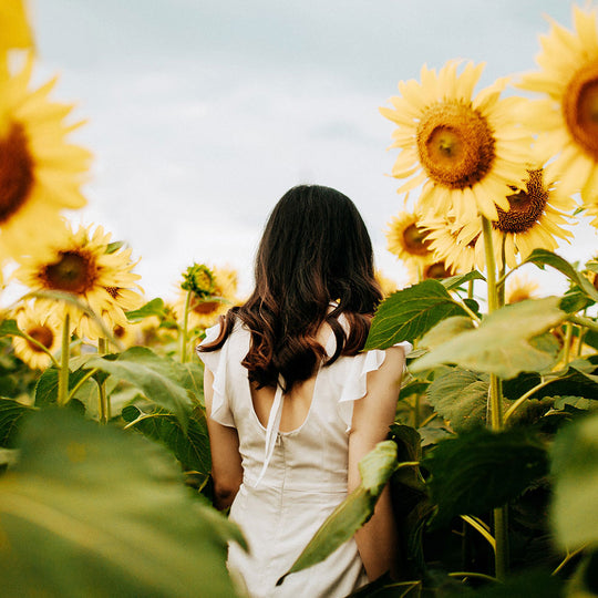 We Bloody Love Sunflowers!