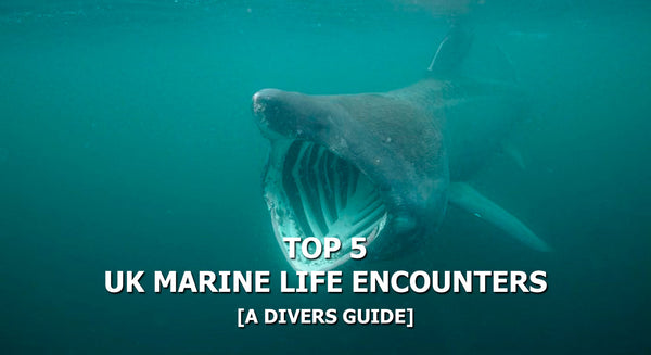 Top 5 British Marine Life Encounters