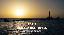 Top 5 Red Sea Reef Dives