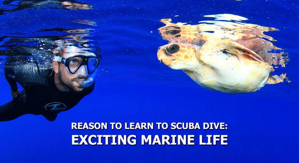 Reasons To Learn To Scuba Dive - Exciting Marine Life