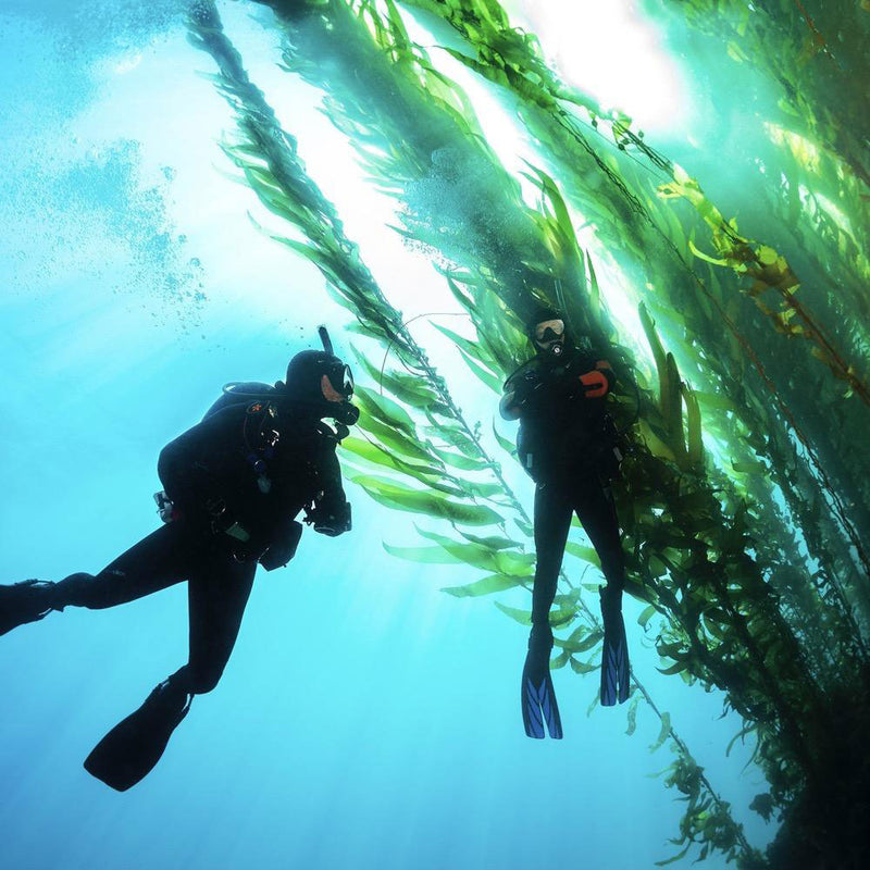 PADI Open Water Diver course in the sea | Scuba Leeds UK