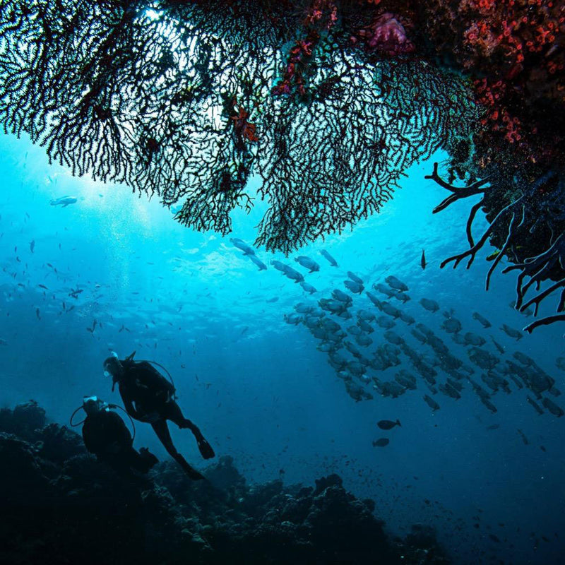 PADI Open Water Diver course with school of fish | Scuba Leeds UK