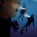 PADI Specialty Instructor | Scuba Leeds UK