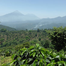 Load image into Gallery viewer, guatemala Huehuetenanago coffee origin coffee plants, coffee trees volcanic soil