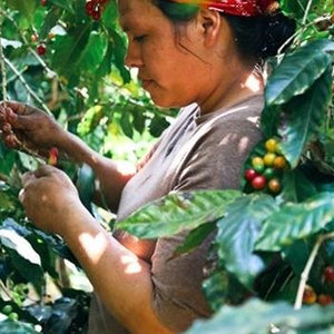 El Salvador las ranas specialty coffee